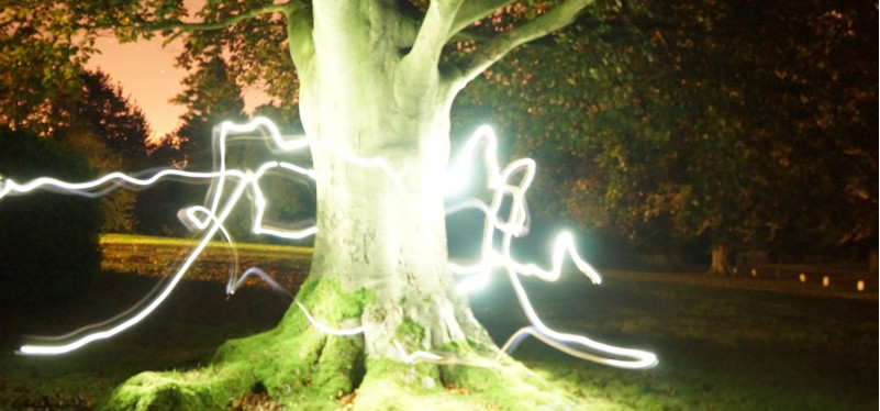 a tree illuminated by streaks of light