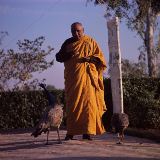 Jagdish Kasyap With Peacocks