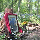 Redon In The Bluebell Wood