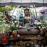 lotusbuddhafield's picture