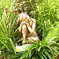 The Buddha at Lantern Cottage in Glastonbury