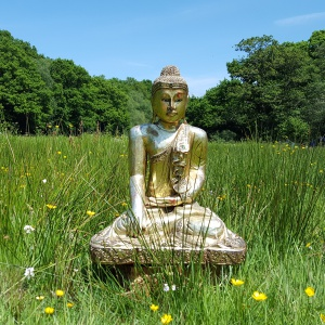 Buddha in the Field