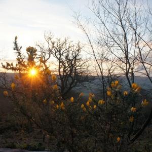 Sun rising at Buddhafield