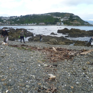 Making Owhiro Bay a little more beautiful