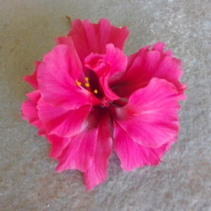 Shoe Flower