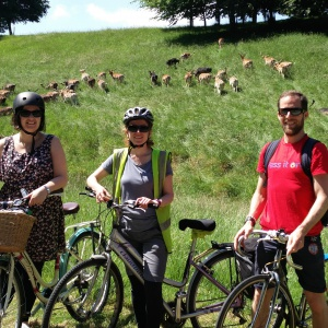 The Sangha Cycle in the Phoenix park with the background of deer grazing very close by