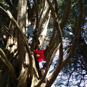 Tree climbing during the Sangha cycle!