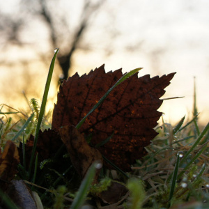 Leaf in a field
