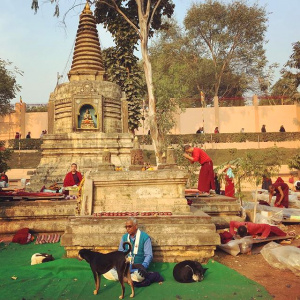 Species diversity at the Mahabodhi Temple