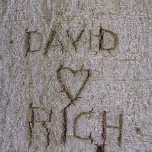 Tree of love 2