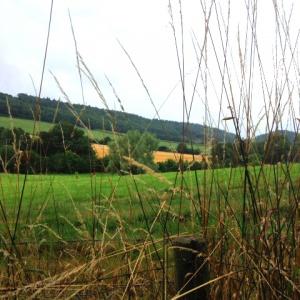 Field near Adhisthana