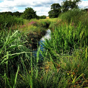 Wetland sewage system
