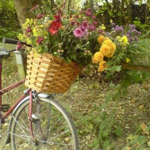 shrine flowers from the allotment