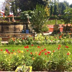 Mahabodhi flowers
